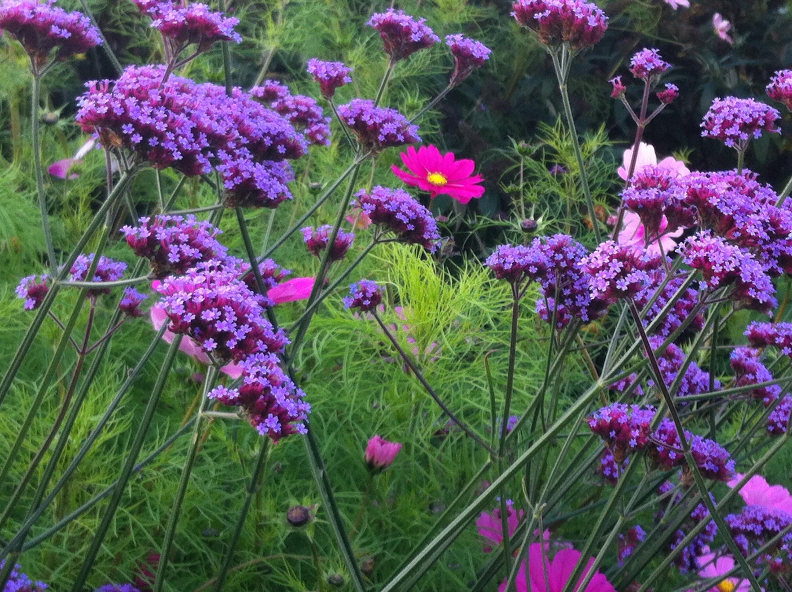 RHS Wisley garden planting border