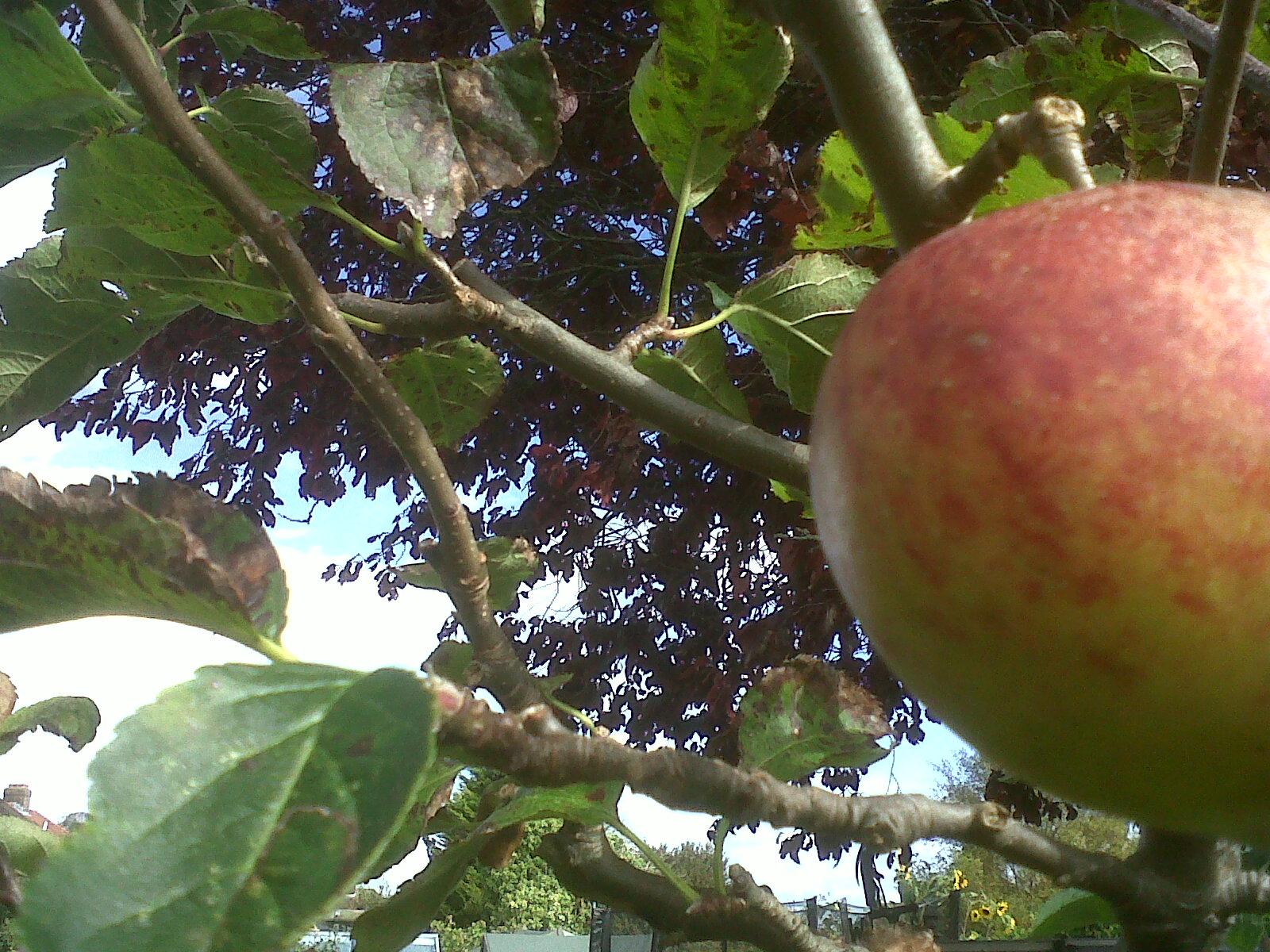 garden tree, east sussex
