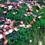 Sussex landscaping - leaves fallen