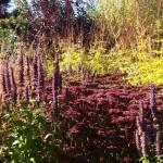 herbaceous perennial planting plans