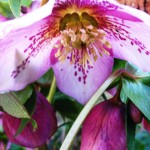 List for winter interest planting, colour and architectural foliage