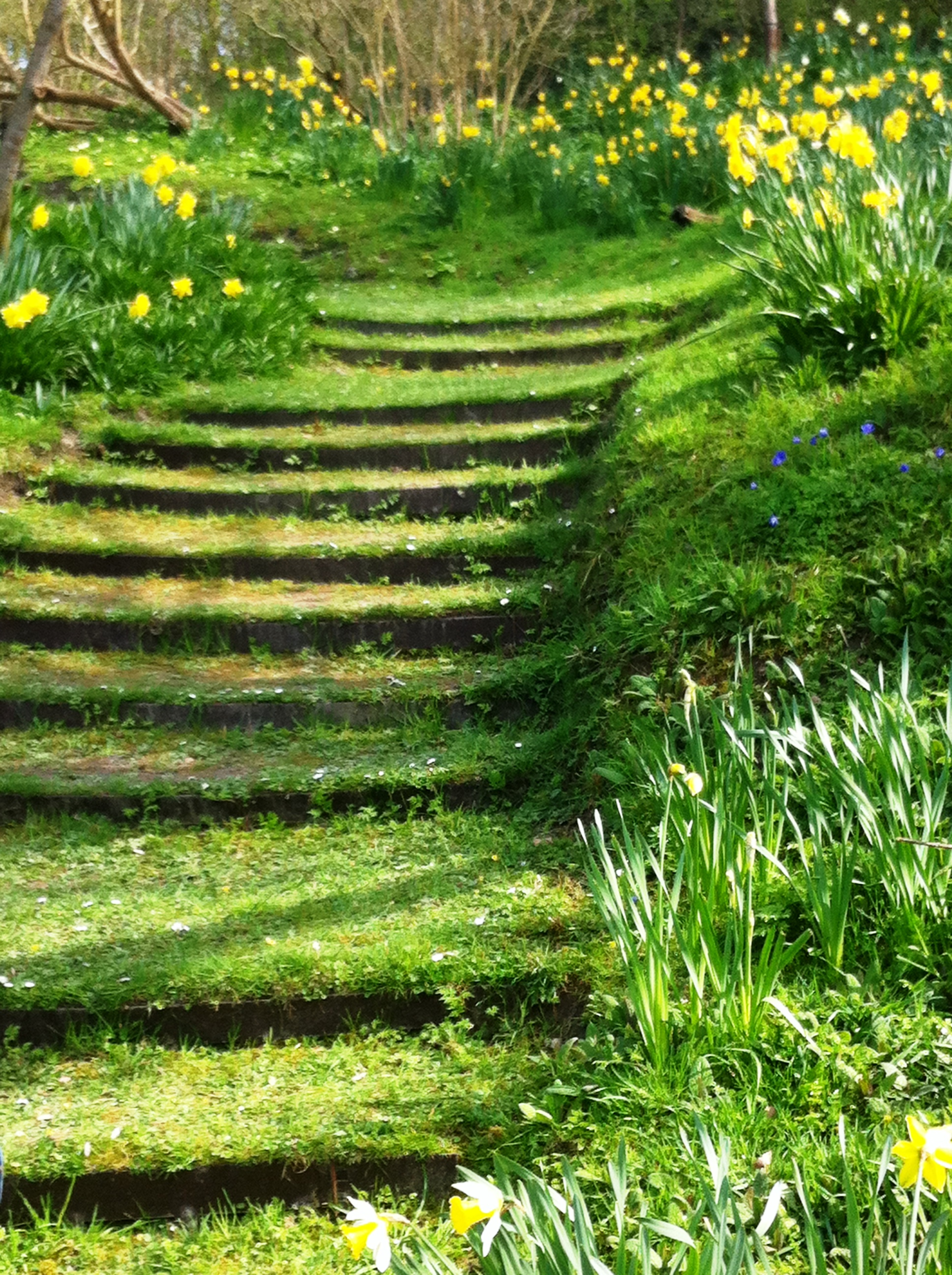 Turfed stairs, Firle place, Gardens in East Sussex