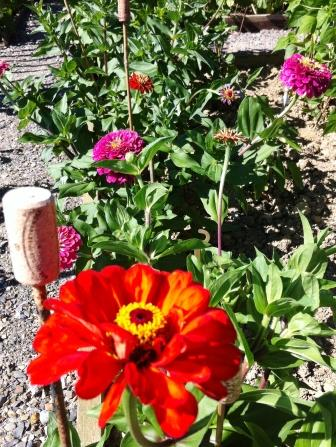Flowers in the french potager garden