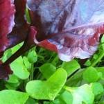 Foliage, allotment, gardens, Lewes, design inspiration