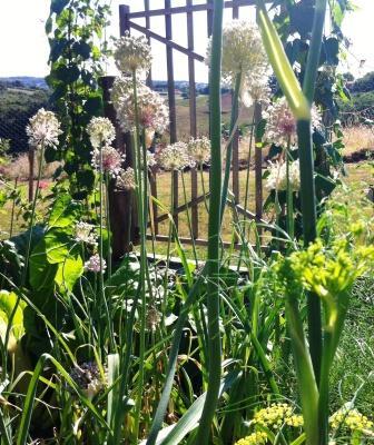 bespoke garden gate in the potager