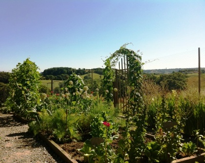 Potager and the pyrennes - gardening