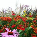 sussex prairies plant combinations 2