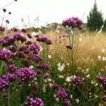 sussex prairies plant combinations 3