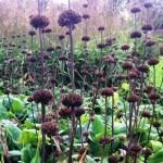 sussex prairies plant combinations 5 sharper
