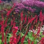 sussex prairies planting combinations 1