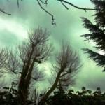Arlington Resevoir, winter trees