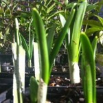 Plants at seedy saturday Lewes