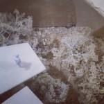 Wilson McWilliam studio design, miniature garden show