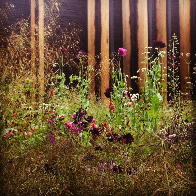 Cloudy Bay Sensory Garden   RHS Chelsea Flower Show 2014 ...