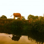 River Ouse nature