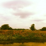 River Ouse view