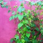artisean garden conservatory