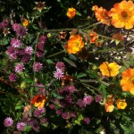 Macmillan Legacy Garden planting