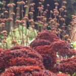 Seed heads at Nymans