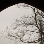 Winter tree Sissinghurst