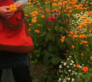 Harvesting flowers