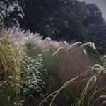combination-planting-with-grasses
