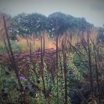 digitalis-and-grasses-in-a-landscape
