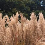 grasses-and-trees
