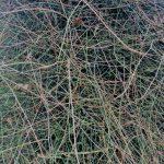 sheffield-park-tree-texture