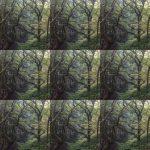 textured-trees