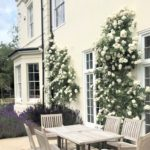 Picture of a side terrace with salvia and rose p[lanting and a dining table